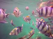 菲律賓-科隆沉船潛水:snorkel9_r.jpg