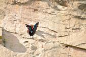 玻利維亞:Parrot3.JPG