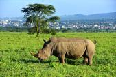 東非:rhino1_r.jpg
