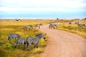 東非:zebra1_r.jpg