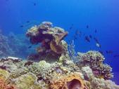 印尼美娜多泗水:dive6.jpg