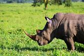 東非:rhino4_r.jpg