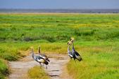 東非:crane5_r.jpg
