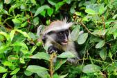 東非:monkey12_r.jpg