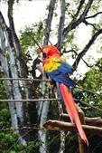 Honduras: Copan:1775979079.jpg