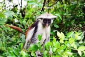 東非:monkey5_r.jpg