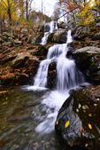 Shenandoah,仙納度國家公園:Fall9.JPG