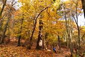 Shenandoah,仙納度國家公園:Fall4.JPG