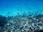 東非:fish52_r.jpg