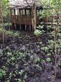 東非:forest2.JPG