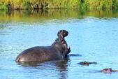 東非:hippo3_r.jpg
