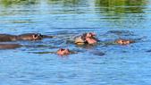 東非:hippo4_r.jpg