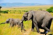 東非:elephant5_r.jpg