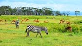 東非:zebra2_r.jpg