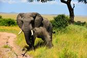 東非:elephant1_r.jpg