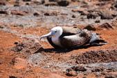 Galapagos:bird4.JPG