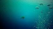 印尼美娜多泗水:turtle_lomo.jpg