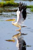 東非:bird1_r2.jpg