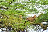 東非:lion4_r.jpg