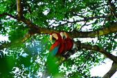 玻利維亞:Parrot9_r.jpg