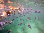 菲律賓-科隆沉船潛水:snorkel12_r.jpg