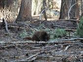 紅杉及國王谷國家公園 2009.09:1703030538.jpg
