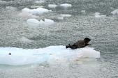 2014.07 Glacier Bay:boat10.JPG