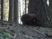 紅杉及國王谷國家公園 2009.09:1703030542.jpg