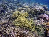 印尼美娜多泗水:dive2.jpg