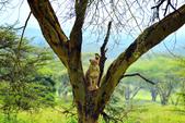 東非:lion2_r.jpg