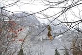 Yosemite 2009.12:1215179353.jpg