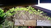 20140808-峇里島:Bali_106.JPG
