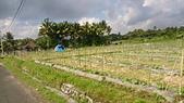 20140808-峇里島:Bali_093.JPG