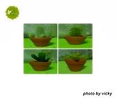 我的收藏 可愛的仙人掌:我的收藏 仙人掌.jpg