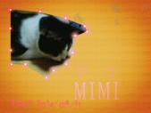 咪咪:MIMI.gif