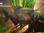 紐西蘭風景篇:食人魚.JPG