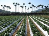 2012.1.27 大湖草莓&巧克力雲莊:要來採…2月是最佳季節唷!