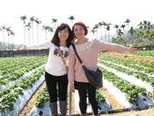 2012.1.27 大湖草莓&巧克力雲莊:採不了多少,還是要跟草莓園拍!