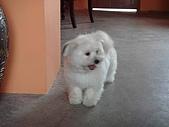 Phoebe of April:1208335380.jpg