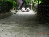 110824記錄我家後花園系列四:火焰山_承天禪寺:照片 181.jpg