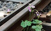 2008-04武陵農場:970426武陵Yao_067~鐵軌旁的小花