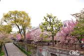 2013-04京阪奈花見DAY1:DSC_5038-2_調整大小D6.jpg