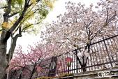2013-04京阪奈花見DAY1:DSC_5040-2_調整大小D6.jpg