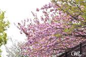 2013-04京阪奈花見DAY1:DSC_5041-2_調整大小D6.jpg