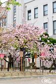 2013-04京阪奈花見DAY1:DSC_5049-2_調整大小D6.jpg