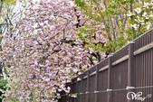 2013-04京阪奈花見DAY1:DSC_5052-2_調整大小D6.jpg
