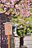 2013-04京阪奈花見DAY1:DSC_8298-2_調整大小D7.jpg