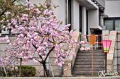 2013-04京阪奈花見DAY1:DSC_8302-2_調整大小D7.jpg