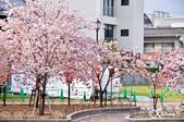 2013-04京阪奈花見DAY1:DSC_8254-2_調整大小D7.jpg