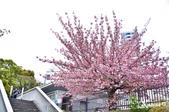 2013-04京阪奈花見DAY1:DSC_8262-2_調整大小D7.jpg